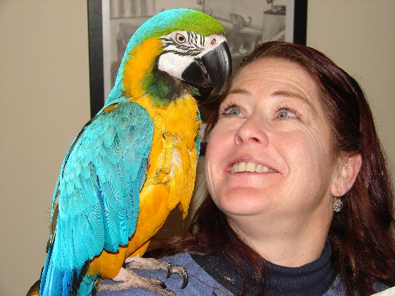client with parrot